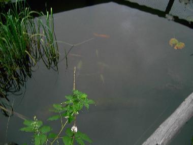 Ferienwohnung kleinarl ferienwohnungen appartment heiss for Koi mit goldfischen